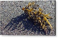 Seaweed Shadow Acrylic Print