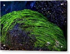 Seaweed Acrylic Print by Victoria Clark