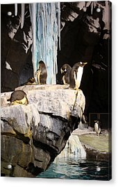 Seaworld Penguins Acrylic Print