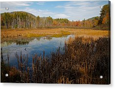 Secluded Adirondack Pond Acrylic Print by David Patterson