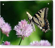 Second Nature Butterfly Acrylic Print by Christina Rollo