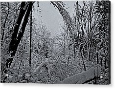 Second Winter Storm Acrylic Print by Mary Anne Williams
