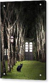 Secret Forest Dwelling Acrylic Print by Nirdesha Munasinghe