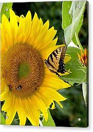 Secret Lives Of Sunflowers 2 Acrylic Print by Kim Bemis