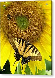 Secret Lives Of Sunflowers Acrylic Print