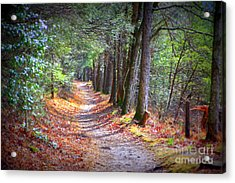 Secret Pathway 1 Acrylic Print