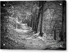 Secret Pathway Acrylic Print