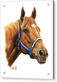 Secretariat With Halter Acrylic Print by Pat DeLong