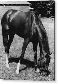 Secretariat Vintage Horse Racing #03 Acrylic Print by Retro Images Archive
