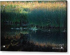 Sedges At Sunset Acrylic Print by Cynthia Lagoudakis