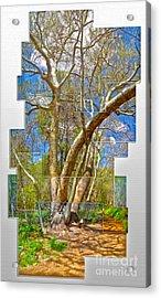 Sedona Arizona Big Tree Acrylic Print by Gregory Dyer