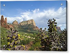 Sedona Cactus In Bloom Acrylic Print