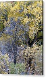 Sedona Fall Color Acrylic Print