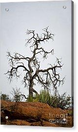Sedona Landscape Vii Acrylic Print by Dave Gordon