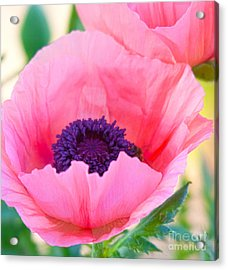 Seductive Poppy Acrylic Print by Roselynne Broussard