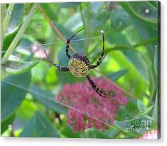 Acrylic Print featuring the photograph See My Web by Deborah DeLaBarre