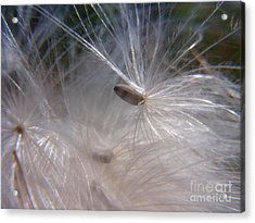 Acrylic Print featuring the photograph Seed Of Life by Agnieszka Ledwon