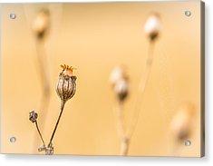 Seed Pod. Acrylic Print