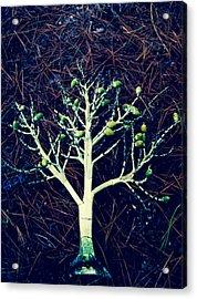Seeded Tree's Acrylic Print