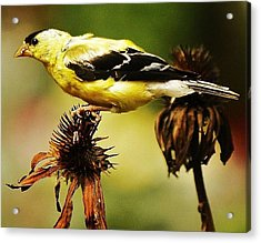 Acrylic Print featuring the photograph Seeds For Me... by Al Fritz