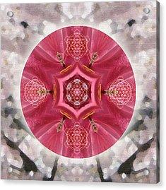 Seeds Of Transformation Acrylic Print