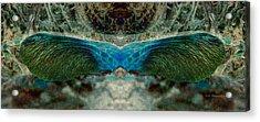 Seedwings Acrylic Print by WB Johnston