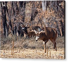 Acrylic Print featuring the photograph Seeing Double by Jim Garrison