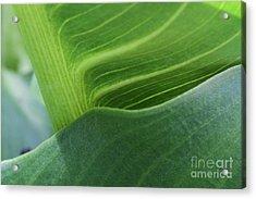 Seeing Green Acrylic Print