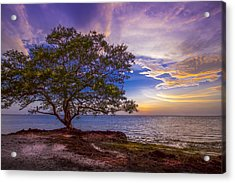 Seeing Is Believing Acrylic Print by Marvin Spates