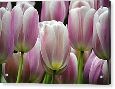 Seeing Pink Acrylic Print by Penny Lisowski