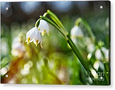 Acrylic Print featuring the photograph Seeing The Sun by Christine Sponchia