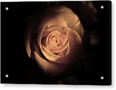 Seek The Light Acrylic Print by Kim Lagerhem