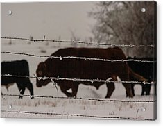 Seeking Shelter From The Cold Acrylic Print