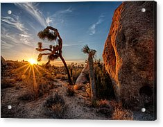 Seeking The Light Acrylic Print by Peter Tellone
