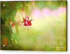 Seeking The Light Acrylic Print by Beve Brown-Clark Photography