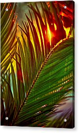 Sego Frond Fire Acrylic Print