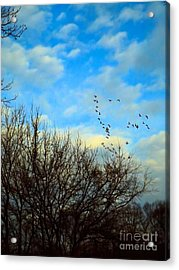 Seize The Day Acrylic Print