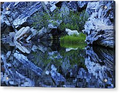 Acrylic Print featuring the photograph Sekani Wild by Sean Sarsfield