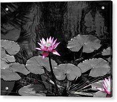 Selective Lily Acrylic Print