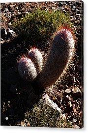 Senor Cacti Acrylic Print