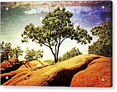 Sentinal Tree Acrylic Print by Marty Koch