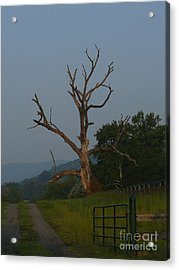 Acrylic Print featuring the photograph Sentinel by Jane Ford