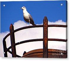 Sentinel Sea Gull Acrylic Print by Joy Hardee