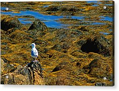 Acrylic Print featuring the photograph Sentinel Seagull by Nancy De Flon