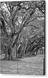 Sentinels Monochrome Acrylic Print by Steve Harrington