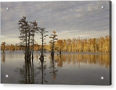 Sentinels Of The Lake Acrylic Print