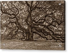 Sepia Angel Oak Acrylic Print