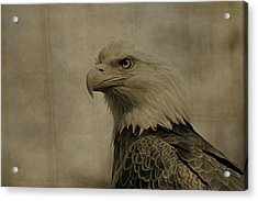 Sepia Bald Eagle Portrait Acrylic Print by Dan Sproul