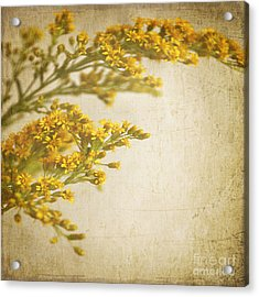 Sepia Gold Acrylic Print by Lyn Randle