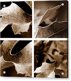 Acrylic Print featuring the photograph Sepia Leaf Collage by Lauren Radke